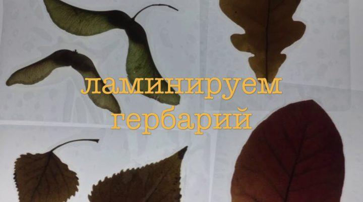 Ламинирование гербария