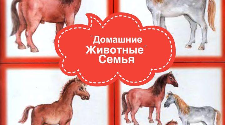 Карточки «Домашние животные — семья»